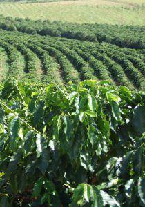 Kaffeeplantage | Spezialitätenkaffee Augsburg